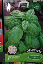 "Basilic ""Genovese"""
