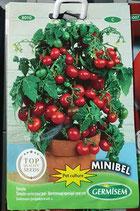 "Tomates ""Minibel"""