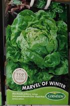 "Laitue ""Marvel of Winter"""