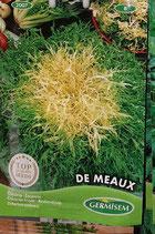 """Chicorée """"De Meaux"""""""