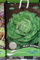 """Laitue """"May Queen"""""""