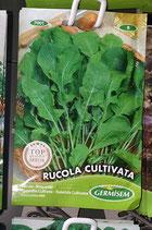 "Roquette ""Cultivata"""