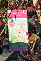 "Acer J.Jewels ""Red Wine selection"""