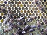 Honig für die Gesundheit und zum geniesen