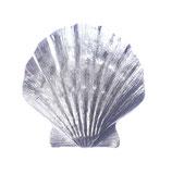 pendant scallop santiago, 925 silver