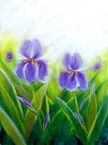 """Serie """"Blumen und Landschaften"""" - Iris"""