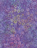 TLT_Bat_567_tonga-b7144-Hyacinth