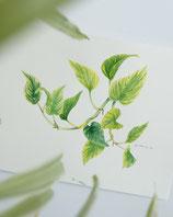 Grünpflanzen und Blätter 08.08.2021