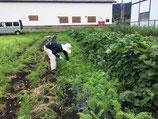 ぷち農ー農業体験