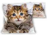 Sweet Cats Dekokissen Kissen mit Füllung 45x45cm Süße Katzen Motiv 1103 Cat