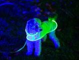 USB Leucht Hunde - Regenweste