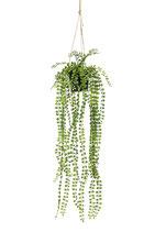 Ficus hangplant 60 cm