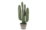 Cactus in pot 68 cm