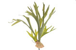 Hertshoorn plant 62 cm