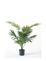 Palm Paradise