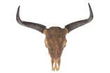 Polyresin buffalo skull