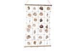 Wanddecoratie net met schelpen