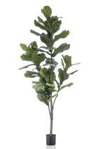 Ficus kunstplant.
