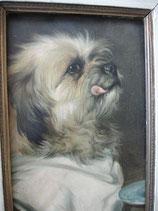 Antikes Hunde Porträt Öl auf Karton