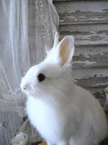 Taxidermy: Zauberhaftes weißes Kaninchen