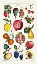 Vintage Früchte Geschirrtuch (Cavallini Papers & Co.)