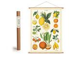 """Vintage Poster Set mit Holzleisten (Rahmen) und Schnur zum Aufhängen, Motiv """"Zitrusfüchte - Zitronen - Orangen"""" (von Cavallini)"""