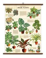 """Vintage Poster Set extra groß mit Holzleisten (Rahmen) und Schnur zum Aufhängen,  Motiv """"House Plants - Zimmerpflanzen"""""""