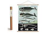 """Vintage Poster Set mit Holzleisten (Rahmen) und Schnur zum Aufhängen, Motiv """"Wale"""" (von Cavallini)"""