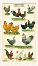Hühner und Hähne - Chicken and Roosters Geschirrtuch (Cavallini Papers & Co.)