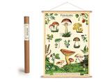 """Vintage Poster Set mit Holzleisten (Rahmen) und Schnur zum Aufhängen, Motiv """"Pflanzen und Pilze"""" (von Cavallini)"""