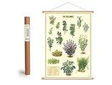 """Vintage Poster Set mit Holzleisten (Rahmen) und Schnur zum Aufhängen, Motiv """"Küchenkräuter, Kräuter"""" (von Cavallini)"""