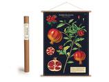 """Vintage Poster Set mit Holzleisten (Rahmen) und Schnur zum Aufhängen, Motiv """"Granatapfel"""" (von Cavallini)"""