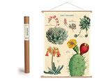 """Vintage Poster Set mit Holzleisten (Rahmen) und Schnur zum Aufhängen, Motiv """"Kakteen - Sukkulente II"""" (von Cavallini)"""