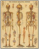 """""""Skelett"""" Cavallini Vintage Puzzle"""