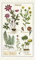 Vintage Herbarium Geschirrtuch (Cavallini Papers & Co.)