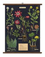 """Vintage Poster Set extra groß mit Holzleisten (Rahmen) und Schnur zum Aufhängen,  Motiv """"Herbarium - Kräuter"""""""