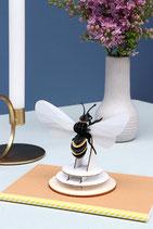 Honigbiene mit transparenten Flügeln