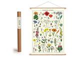 """Vintage Poster Set mit Holzleisten (Rahmen) und Schnur zum Aufhängen, Motiv """" Wildblumen"""" (von Cavallini)"""