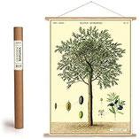 """Vintage Poster Set mit Holzleisten (Rahmen) und Schnur zum Aufhängen, Motiv """" Olivenbaum, Oliven"""" (von Cavallini)"""
