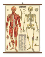 """Vintage Poster Set extra groß mit Holzleisten (Rahmen) und Schnur zum Aufhängen, Motiv """"Anatomie"""""""