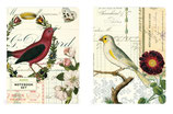 Notebook Set of 2  Birds Notebooks (Cavallini)