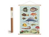 """Vintage Poster Set mit Holzleisten (Rahmen) und Schnur zum Aufhängen, Motiv """"tropische Fische"""" (von Cavallini)"""