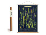 """Vintage Poster Set mit Holzleisten (Rahmen) und Schnur zum Aufhängen, Motiv """"Gräser"""" (von Cavallini)"""