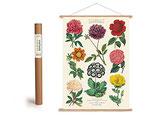 """Vintage Poster Set mit Holzleisten (Rahmen) und Schnur zum Aufhängen, Motiv """" Botanica, Blumen"""" (von Cavallini)"""