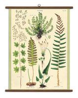 """Vintage Poster Set extra groß mit Holzleisten (Rahmen) und Schnur zum Aufhängen,  Motiv """"Ferns - Farne"""""""