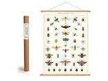 """Vintage Poster Set mit Holzleisten (Rahmen) und Schnur zum Aufhängen, Motiv """"Insekten"""" (von Cavallini)"""