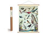 """Vintage Poster Set mit Holzleisten (Rahmen) und Schnur zum Aufhängen, Motiv """"Vögel"""" (von Cavallini)"""