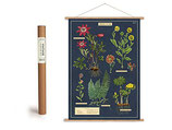 """Vintage Poster Set mit Holzleisten (Rahmen) und Schnur zum Aufhängen, Motiv """"Herbarium"""" (von Cavallini)"""