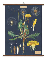 """Vintage Poster Set extra groß mit Holzleisten (Rahmen) und Schnur zum Aufhängen,  Motiv """"Dandelion - Löwenzahn"""""""