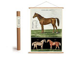 """Vintage Poster Set mit Holzleisten (Rahmen) und Schnur zum Aufhängen, Motiv """"Pferd"""" (von Cavallini)"""